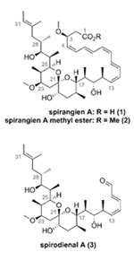 accelerating-spirocyclic-polyketide-synthesis